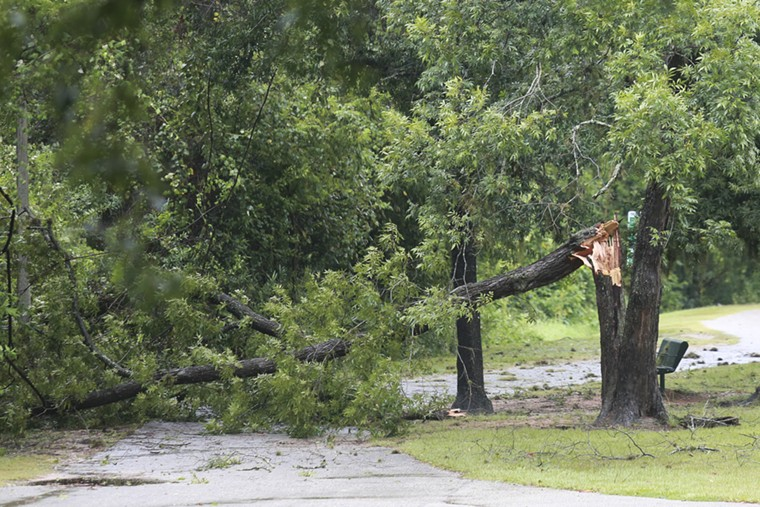 Trees sustained some serious damage in Terry Hershey Park off of Eldridge. - PHOTO BY REGGIE MATHALONE