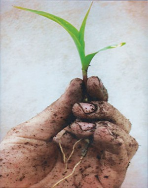 """First place, """"Young Sapling,"""" Kinley Whalen"""