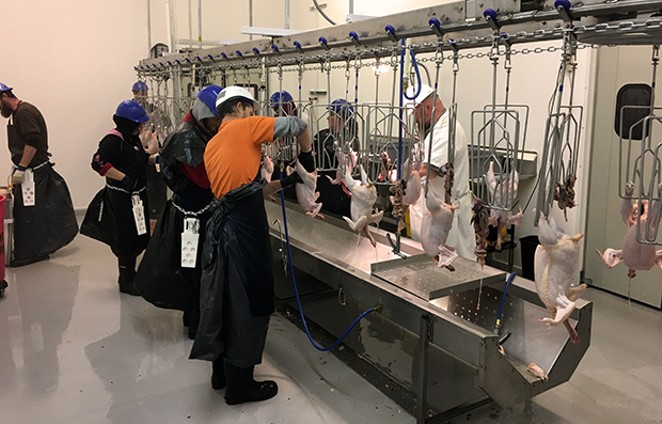 Workers process chickens at Petersburg Processing. - PHOTO COURTESY OF PETERSBURG PROCESSING