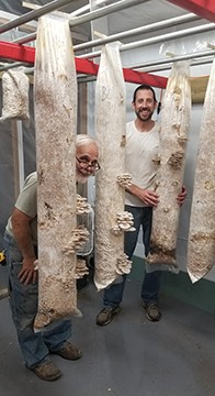 Ben Kruger, left, and August Jones in the colonization room with oyster mushrooms