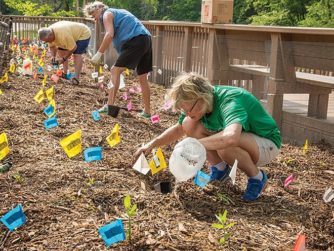 Susan Helm (front, in green shirt) planting 1,000 native plant plugs in the lower lagoon native plant garden in Washington Park, May 14, 2018. - PHOTO BY DOUG CARR