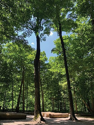 The Chapel of the Templed Trees at Funk's Grove, just off I-55 south of Bloomington, offers a quiet place to contemplate nature. The chapel's pews are cut from American - Red Elms. - PHOTO BY MARY BOHLEN