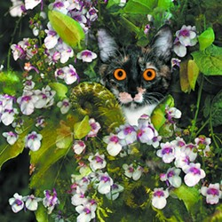 """Pepper's Bouquet"" ? Gay Waldman of Spokane works in digitally enhanced photography."