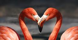 flamingo-600205_1920.jpg
