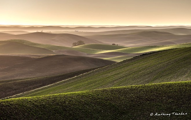 The photo of the Palouse hills in May by Tony Thurber.