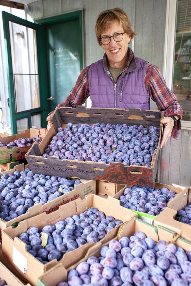 Jeanne Leffingwell has collected a variety of recipes that use the Italian prune plums she picked from trees outside her home on Monday in Moscow. - GEOFF CRIMMINS/DAILY NEWS