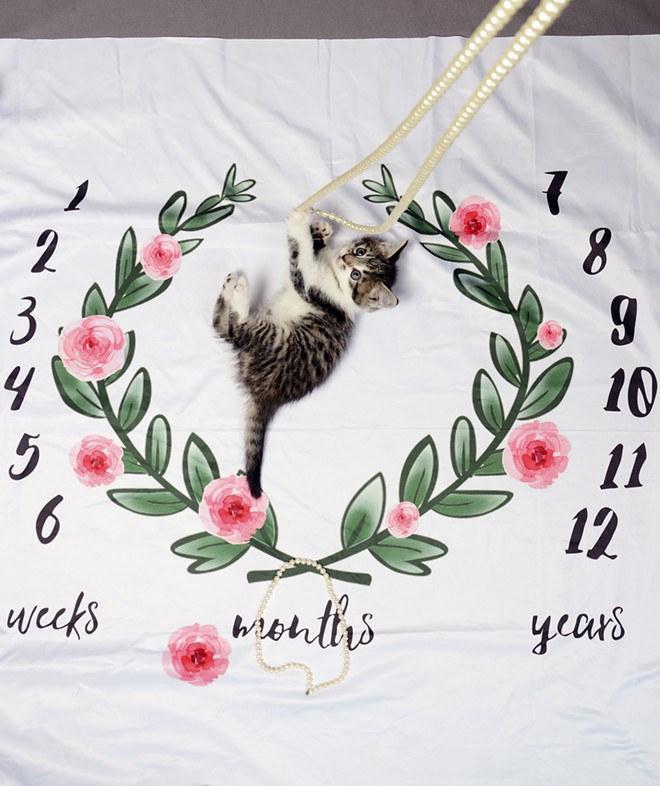 "Tue, a five-week old kitten, bats its paws at beads while laying on a baby milestone blanket on Friday. Tue, which means ""peaceful man"" in Norse, is in foster care with Kaylee Ward, who works at the Lewis-Clark Animal Shelter. He will be available for adoption at the end of April. - TRIBUNE/PETE CASTER"