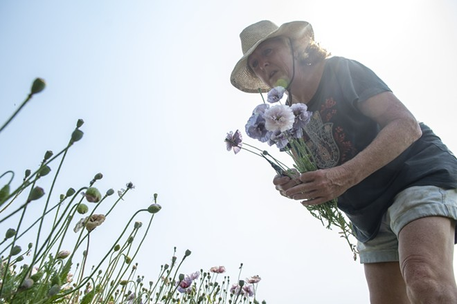 Taugher searches for poppy flowers to pick from her farm as she puts together a bouquet. - ZACH WILKINSON / INLAND 360