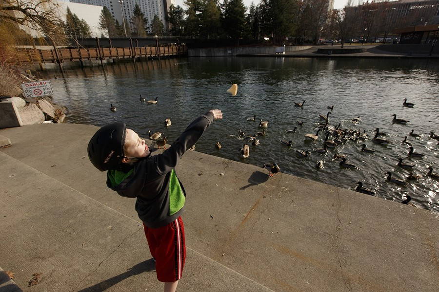 Seven-year-old Cramer throws bread towards ducks and geese. - YOUNG KWAK
