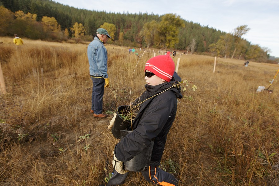 9 year old Cole Skidmore carries quaking aspens to be planted. - YOUNG KWAK