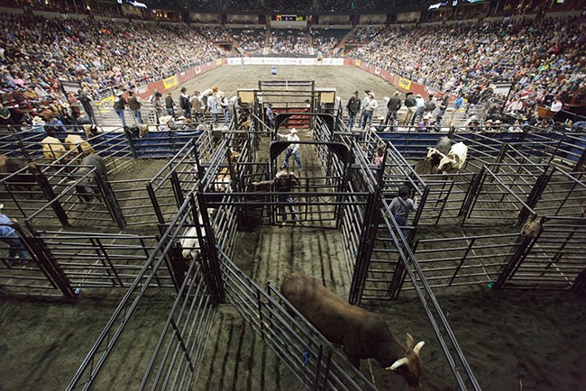 A bull enters a pen during the Wrangler Professional Bull Riders Classic on Saturday. - YOUNG KWAK