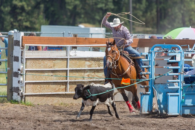 A cowboy chases a calf, in which he will rope and tie up in the fastest time. - MATT WEIGAND