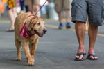 A dog named Cody walks with his owners in Riverfront Park.