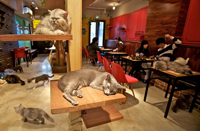 A scene from a Japanese cat cafe. Japan has the most cat cafes in the world with more than 150 across the country.