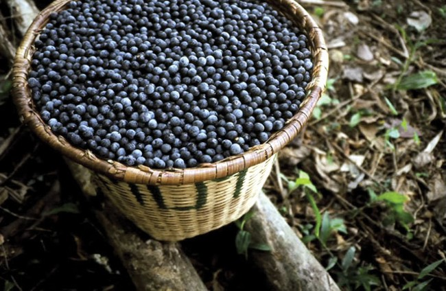 Acai berries are full of antioxidants, fiber and minerals, but nutritionists are skeptical of overblown health claims.