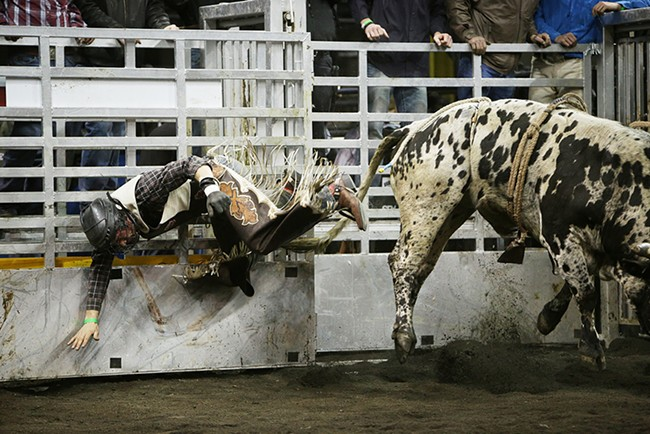 Allen Helmuth, of Redmond, Ore., falls off T71 Roosters Egg during the Championship Round. He rode 6.38 seconds before falling off the bull. - YOUNG KWAK
