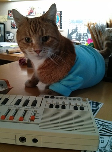 Benny, the friendly orange tabby is the modern face of the Keyboard Cat videos and brand. - CHEY SCOTT
