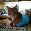 CAT FRIDAY: Meet the guy behind Keyboard Cat, Spokane's Charlie Schmidt
