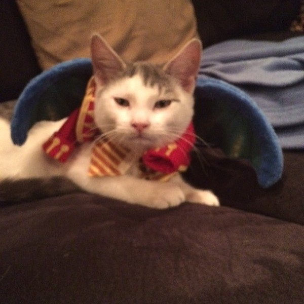 Blinky, from New York City, is a flying monkey from the Wizard of Oz. Submitted by Isis K.