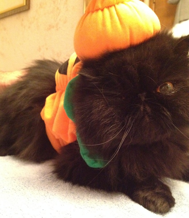 Bubba the Great Pumpkin, Inlander Senior Account Executive Bruce Deming's cat, gives a cute little wink as he gets ready for tonight's Meow-loween festivities.