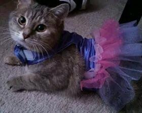 Bubbles the fairy, from Henrico, Virginia. Submitted by Beth W.