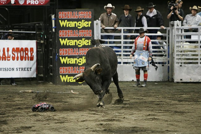 Bull W24 Devil In Disguise goes after a remote control vehicle after knocking off rider Logan Baker, not pictured, of Jamestown, Calif., during Flight 3. Baker rode 3.05 seconds before falling off the bull. - YOUNG KWAK
