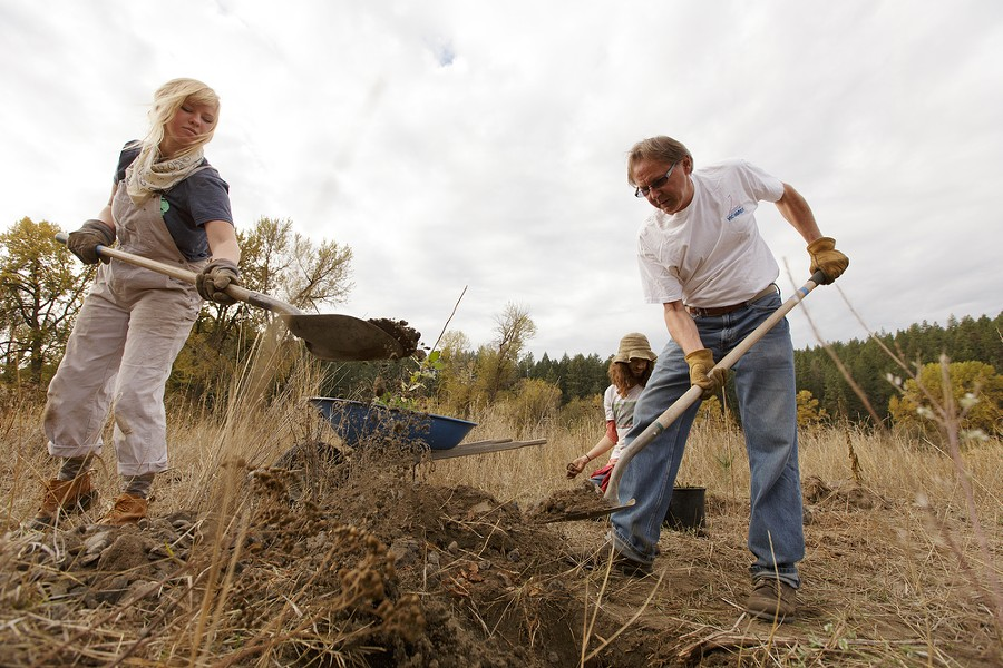 Carrie Herrman, left, and John Ford, right, add dirt to a hole before planting a quaking aspen as Ben Covino looks on. - YOUNG KWAK