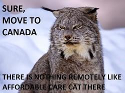 affordablecarecat.jpg