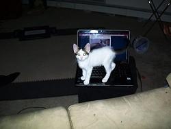 getoutcat.jpg