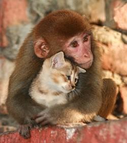 monkey5_4.jpg
