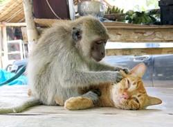 monkey.2.jpg