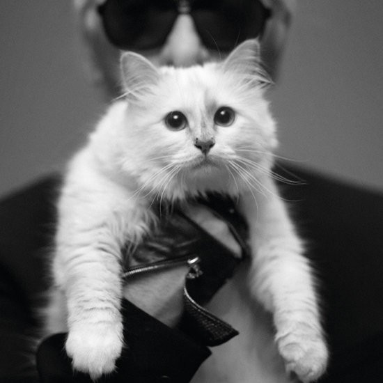 Chanel's creative director Karl Lagerfeld with his feline muse, Choupette.