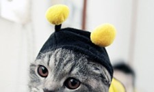 CAT FRIDAY: Cats in costumes Inlander photo contest!