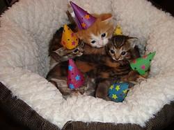 kittens_in_hats.jpg