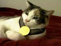 medalcat.jpg
