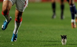 soccercat_1_.jpg
