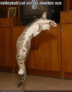 volleyballcat.jpg