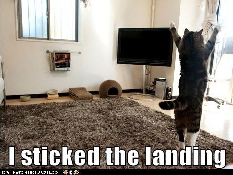 floorcat.jpg