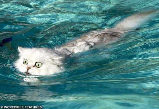 swimcat.jpg