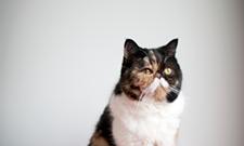CAT FRIDAY: Celebri-Cats Volume III