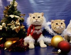 xmascats.jpg