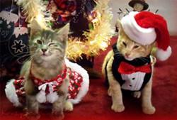 xmascats5.jpg