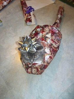 wrappedcat2.jpg