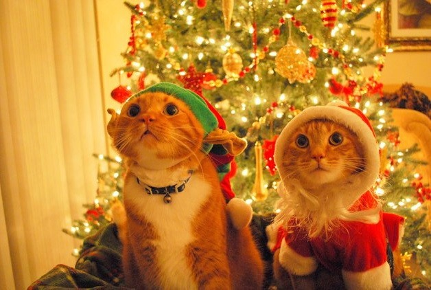 xmascats3.jpg