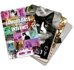 amazecats_coi_spread.jpeg.jpg