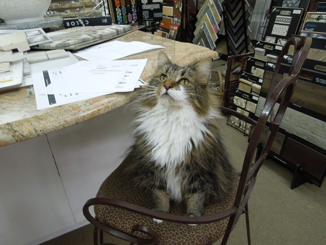Dolly likes to help Hoffman work, and often keeps her company near the studio's work counter. - CHEY SCOTT