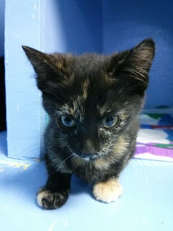 Donations to the Spokane Humane Society help care for tiny kittens like this little girl.