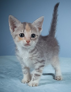 See this tiny kitten and others during Animal Planet's Puppy Bowl X, on Sunday at 3 pm. - ANIMAL PLANET