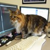 CAT FRIDAY: Meet Design Spike's part-time office cat, Maddie