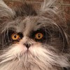 CAT FRIDAY: Meet the Internet's latest feline sensation, Atchoum